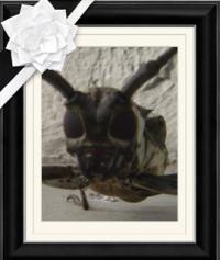 カミキリライダーの遺影