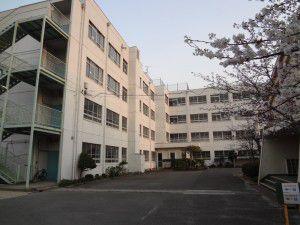冠小学校の桜